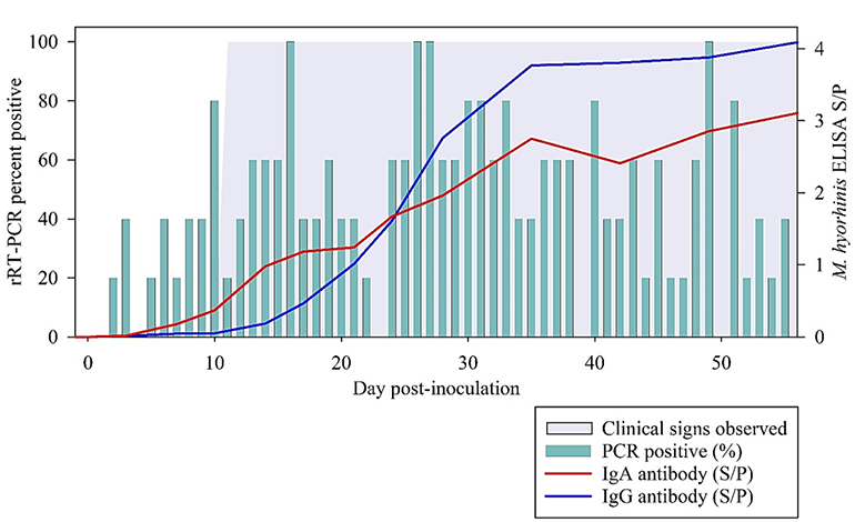 Kinetic of the isotype-specific serum antibody responses (IgG and IgA), bacterial shedding in oral fluids and the progression of Mycoplasma hyorhinis clinical signs under experimental conditions.