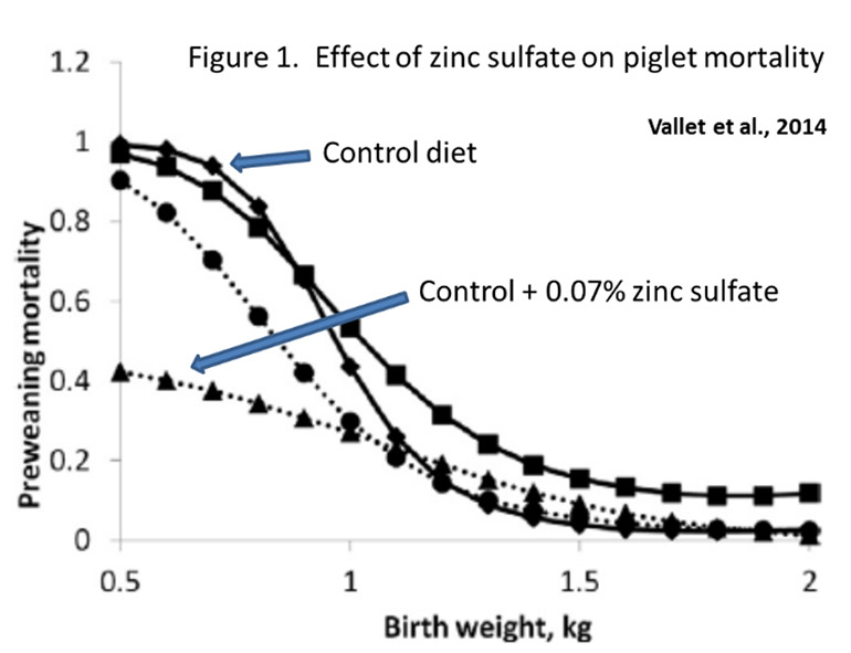 Figure 1: Effect of zinc sulfate on piglet mortality