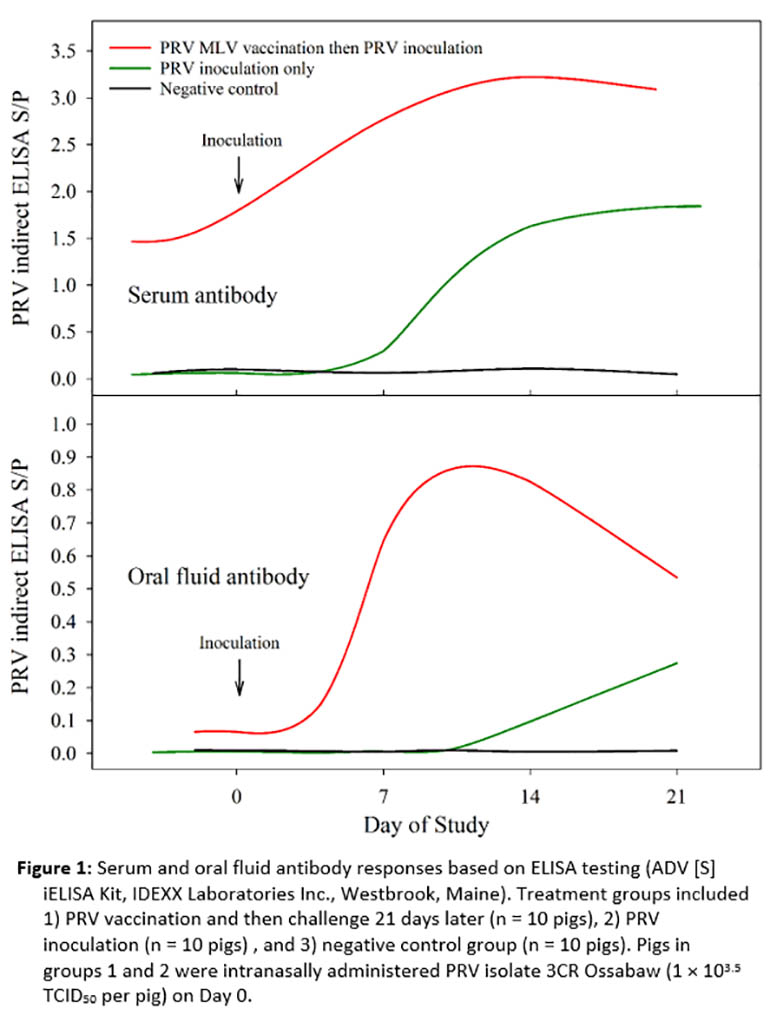 Figure 1: Serum and oral fluid antibody responses based on ELISA testing.