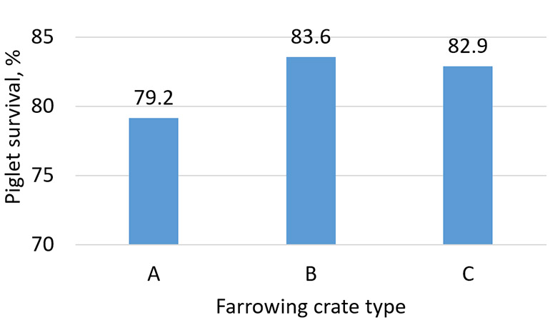 Figure 1: Piglet survival (n=670 sows) across three different farrowing crate sizes at a commercial farm in eastern North Carolina. Length of sow area for farrowing crate types A, B and C were 78, 84 and 83.25 inches, respectively.