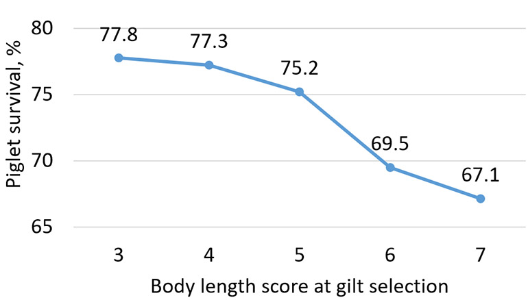 Figure 2: Piglet survival (extrapolated) for sows by body length (1=short; 9=long) at gilt selection. Gilts were followed through multiple parities. Reported farrowing crate length was 90 inches.