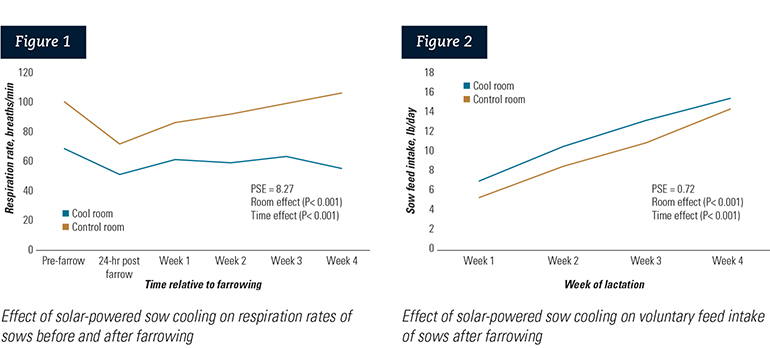 Figure 1: (Left) Effect of solar-powered sow cooling on respiration rates of sows before and after farrowing; Figure 2: (Right) Effect of solar-powered sow cooling on voluntary feed intake of sows after farrowing