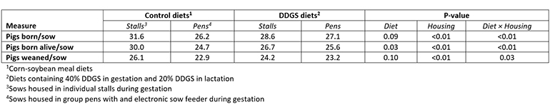Table 3: Interactive effects of feeding diets containing distillers dried grains with solubles and housing systems on total number of piglets born, born alive and weaned for three reproductive cycles (adapted from Li et al., 2014)