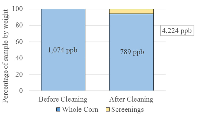 Consider cleaning corn to reduce mycotoxin content