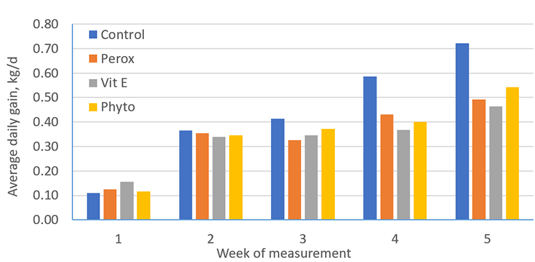 Impact of feeding peroxidized lipids and supplementation of antioxidants (vitamin E or phytochemicals) in the drinking water of nursery pigs on weekly average daily weight gain.