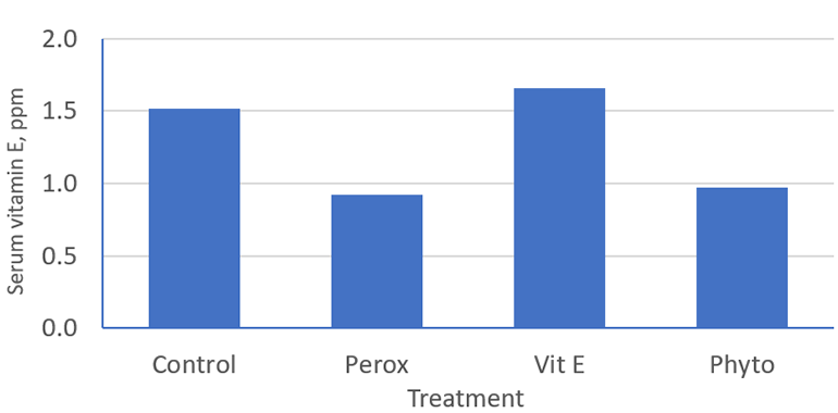Figure 2: Impact of peroxidation of dietary lipid and supplementation of antioxidants (vitamin E and phytogenics) in the drinking water on serum vitamin E concentrations.