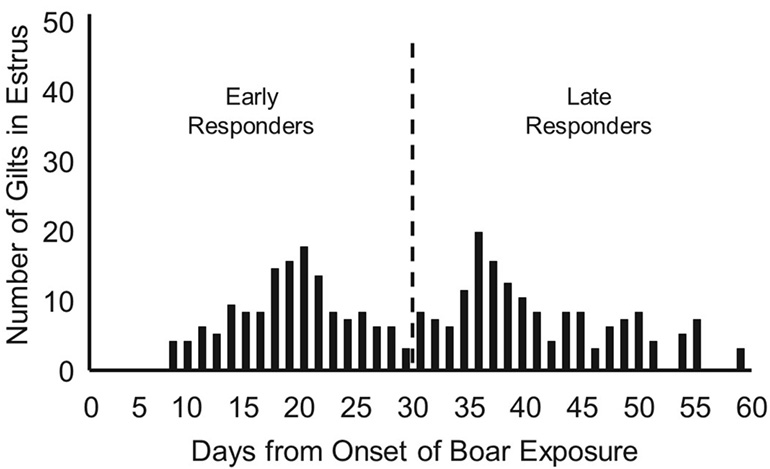 Distribution of first detected estrus when boar exposure was begun when gilts were 150 days of age. Gilts exhibiting estrus before and after 180 days of age (30 days from onset of boar exposure) were classified as early or late responders.