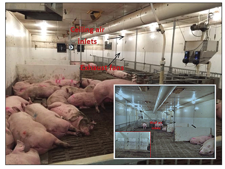 Revamping Ventilation Systems For Sow Housing National
