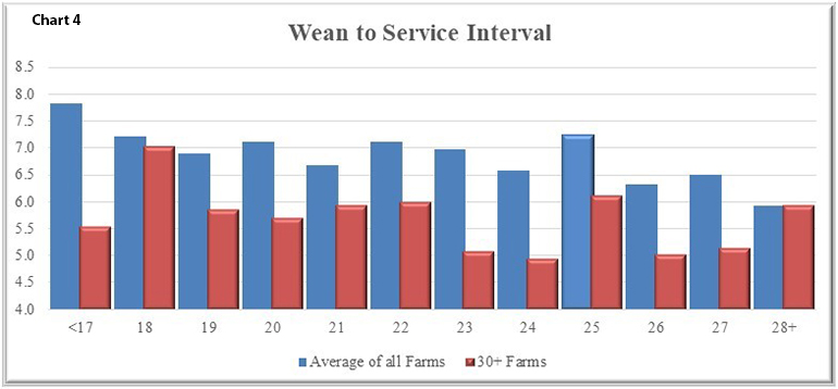 Wean to service interval is one area to be affected by weaning age as shown in Chart 4