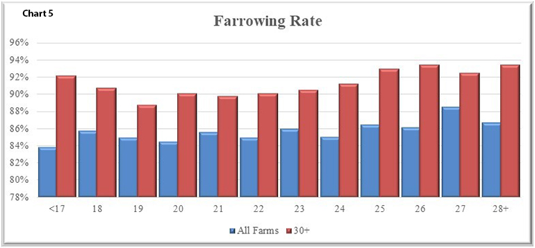 In Chart 5 the farrowing rate for all farms in blue as well as those with 30+ PW/MF/Y in red are shown.