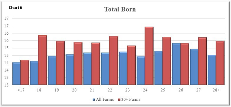 Chart 6 shows an improvement in total born that is similar to that of farrowing rate.