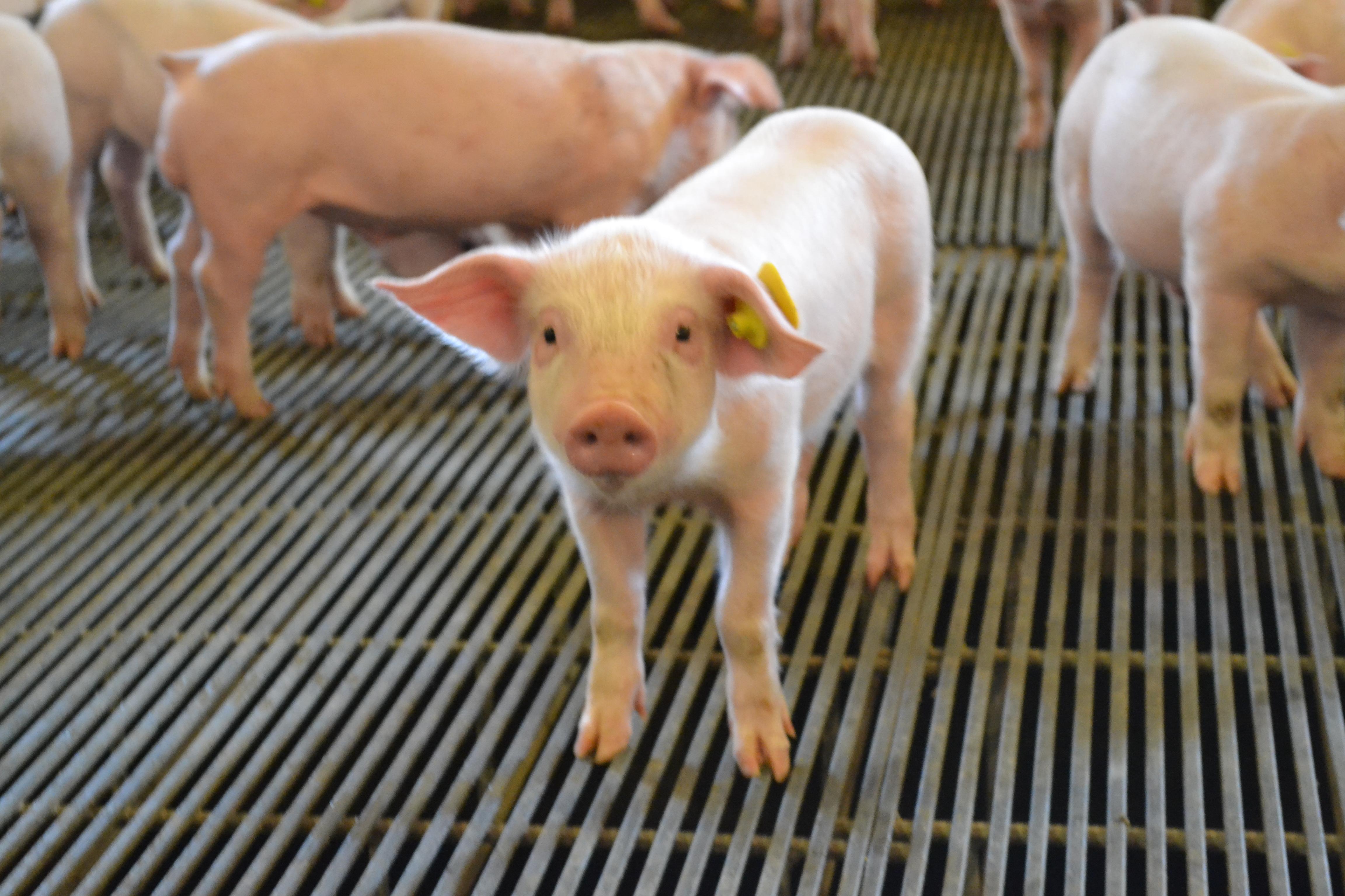 trip commercial corporation mats no floor pig mat pitches new