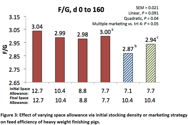 Effect of varying space allowance via initial stocking density or marketing strategy on feed efficiency of heavy weight finishing pigs.