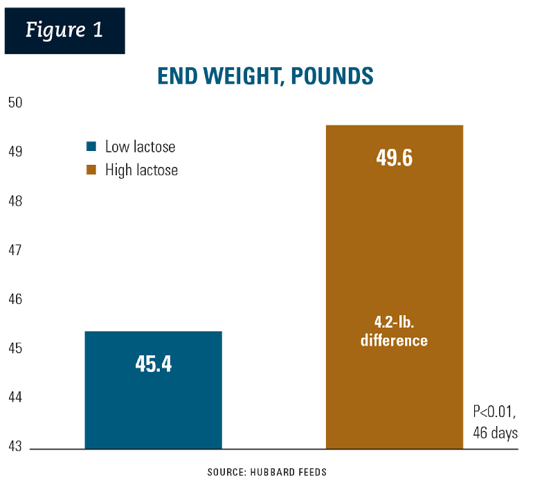 Figure 1: The nursery exit weight reduction of over 4 pounds bodyweight (45.4 versus 49.6) illustrates a response solely to lactose.