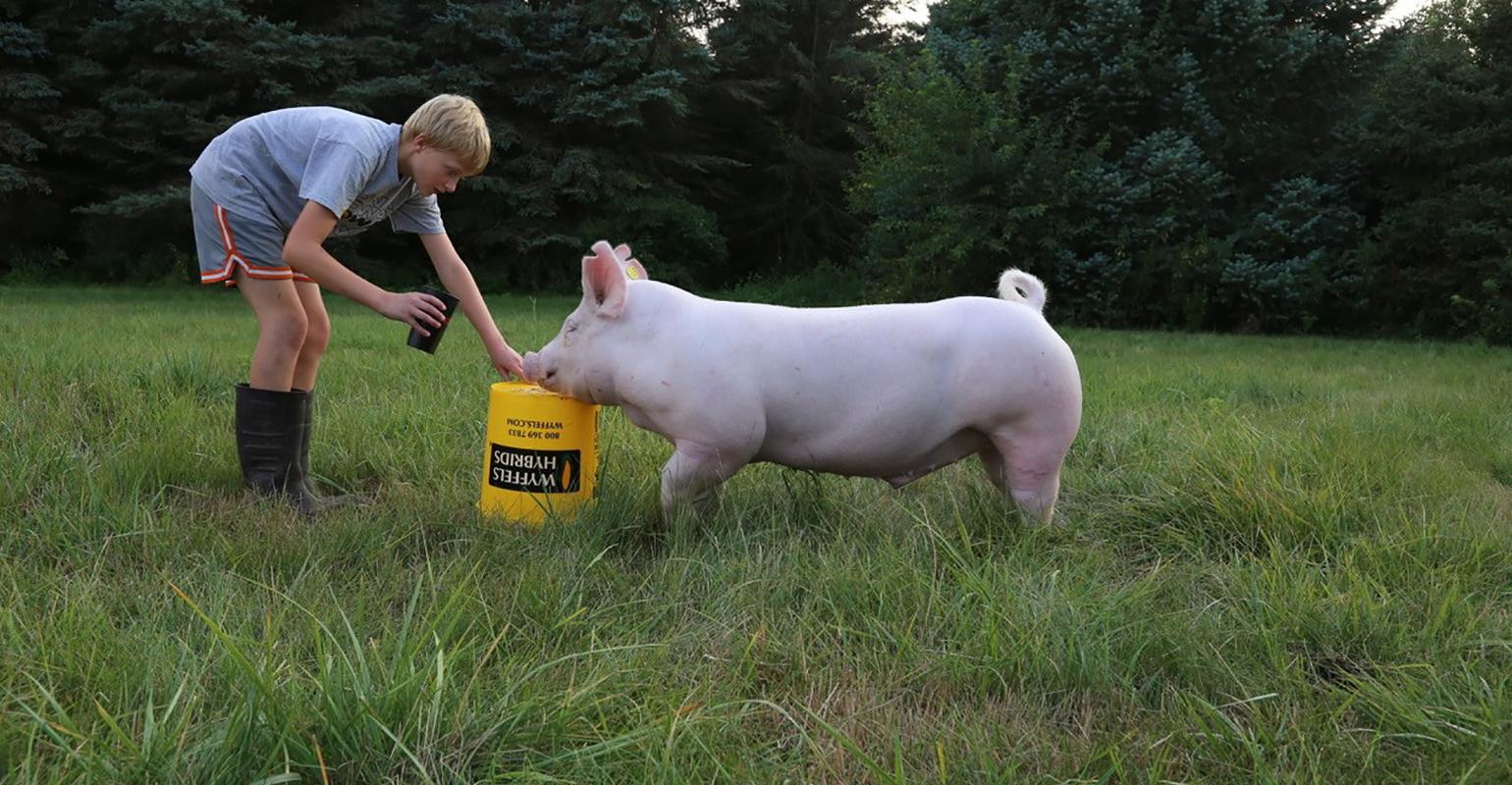Three Ways Pig Farming Positively Impacts The State Of Iowa National Hog Farmer