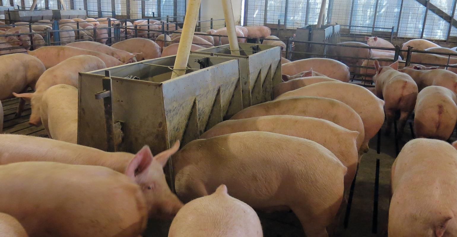China Tariff On U S Pork Now Tops 60 National Hog Farmer