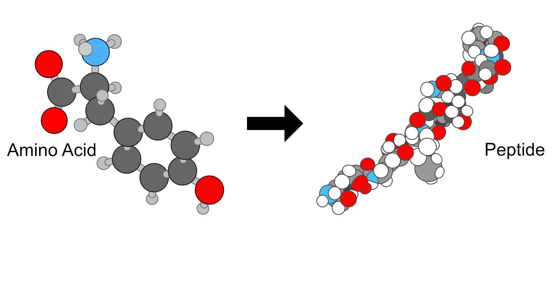 Amino acid and protein intermediate