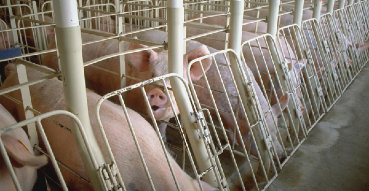 Consumer Survey Outlines Pork Perception Issues | National