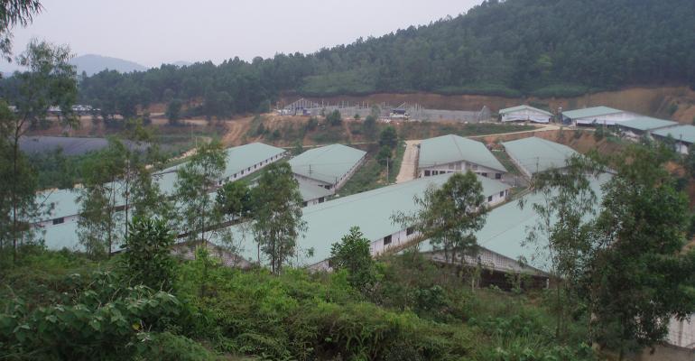 Swine production in Vietnam