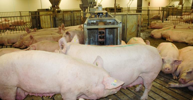 Group-housed sows