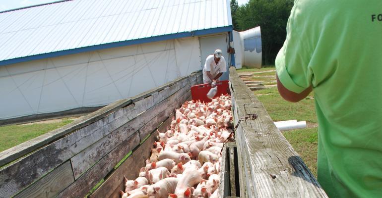 Nursery pig transport