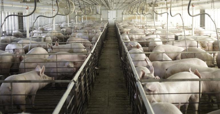 Swine Influenza A