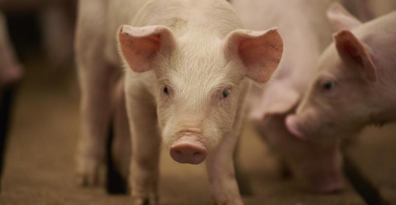 BIVI Swine Influenza A