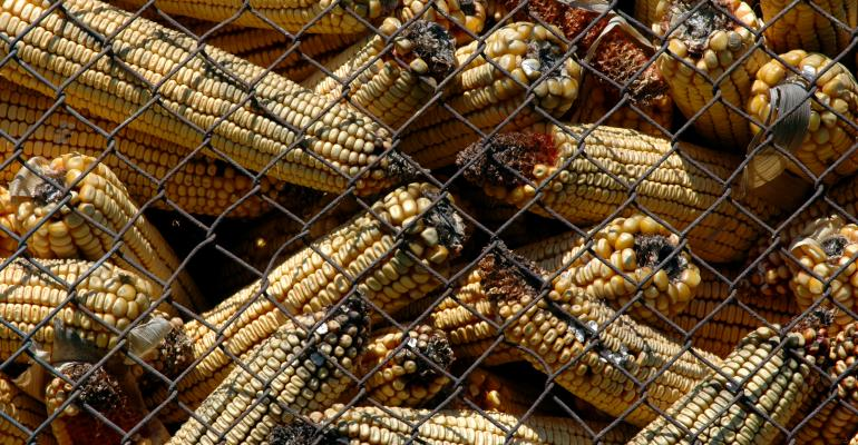 Corn moldy with aflatoxin_ MilosCirkovic_iStock_Thinkstock-536950337.jpg