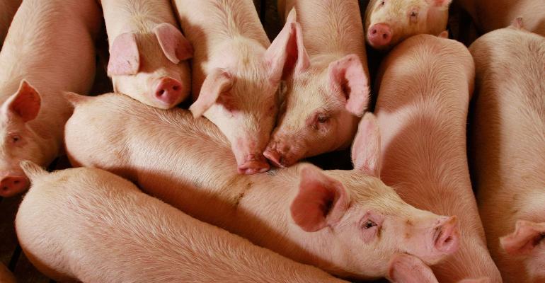 Hogs are raised on the farm in Elma, Iowa.