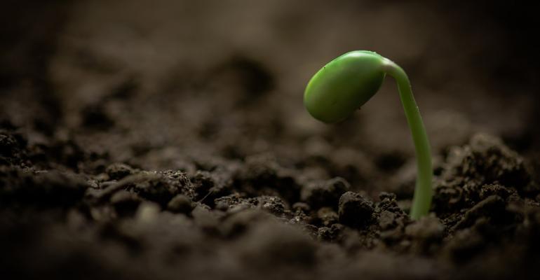 new plant seedling