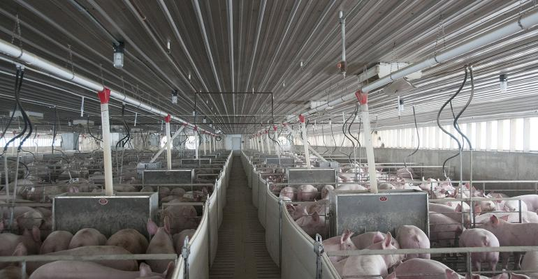 NHF-AP-Swine barn interior photo.jpg
