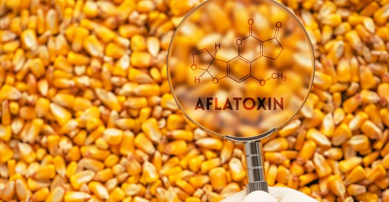 Collecting a reliable sample of grain is key to detecting mycotoxins in an operation.