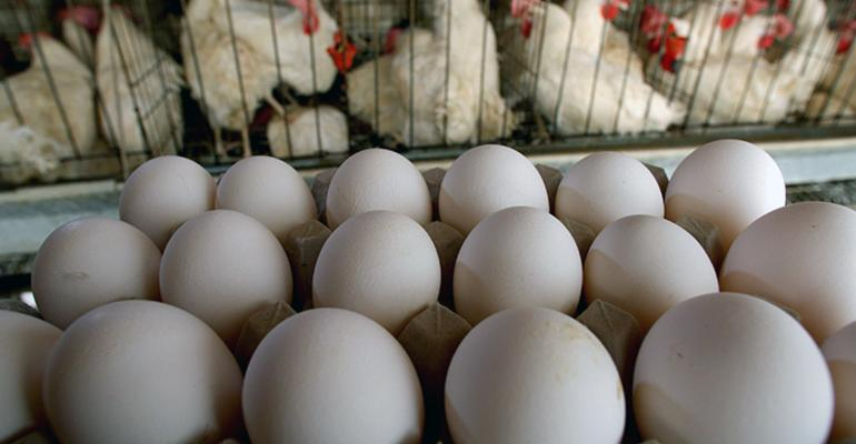Caged chickens with a carton of eggs in the foreground