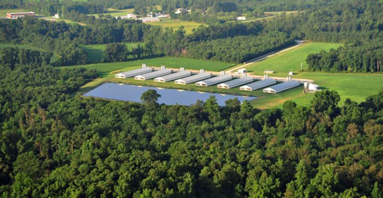 hog farm surrounded by trees