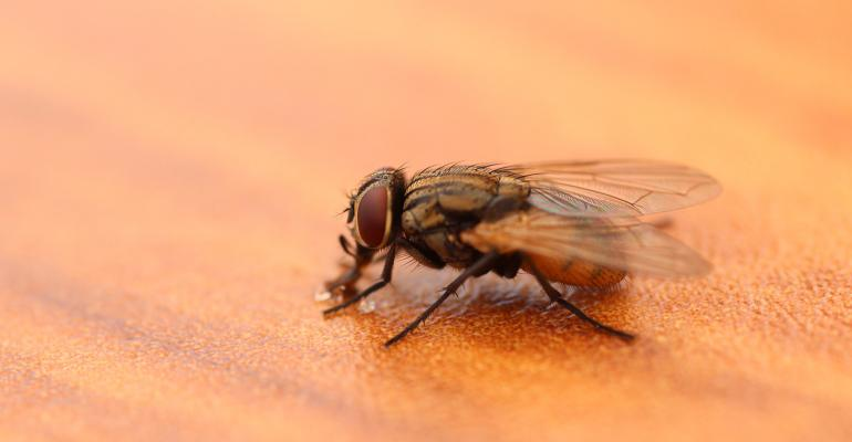 NHF-GettyImages-StableFly-1540.jpg