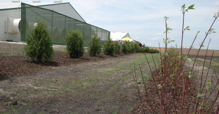 Though the electrostatic fence will capture a lot of the odor-carrying dust particulates, the natural barrier of arborvitae and dogwood shrubs will help keep odors on the farm.