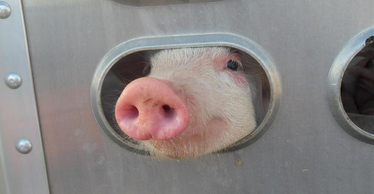 Trends in the transportation norms show that weaned pigs generally are traveling farther than feeder pigs.