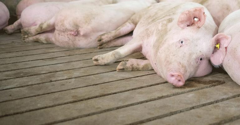Group sow housing should be designed with the sows' needs in mind.