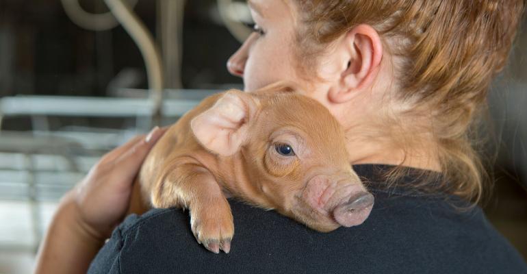NHF-NPB-Employee holding piglet -1540.jpg