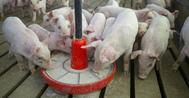 A new publication details the dose necessary to transmit the disease when pigs ingest virus-contaminated feed or liquid.
