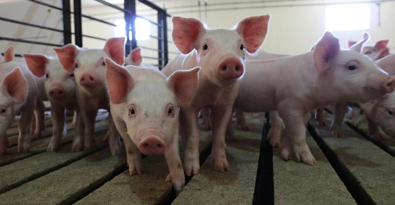 After meat, pharmaceuticals rank second in the important contributions hogs have made to society.