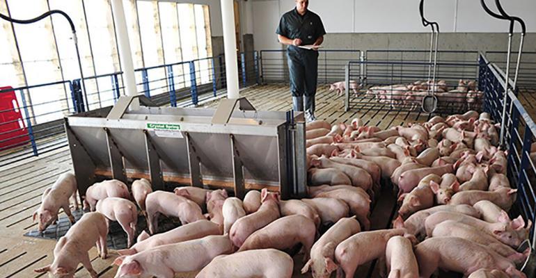 NHF-NPB-Veterinarian Checking Pigs-1540.jpg