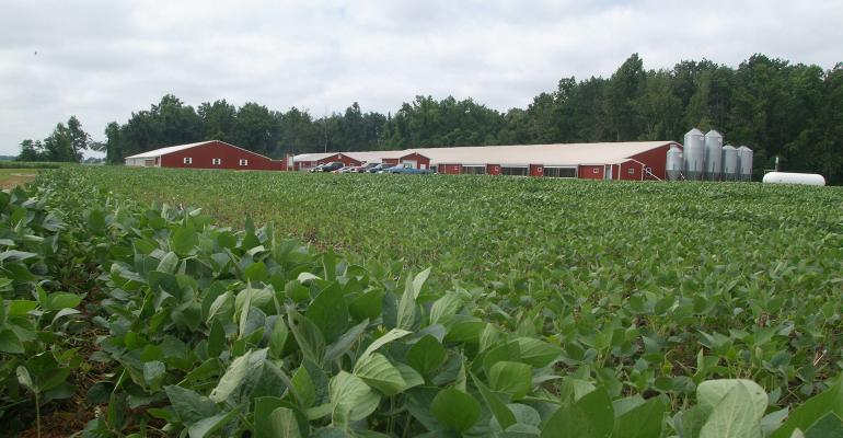 Soybean field with pig barns in the background