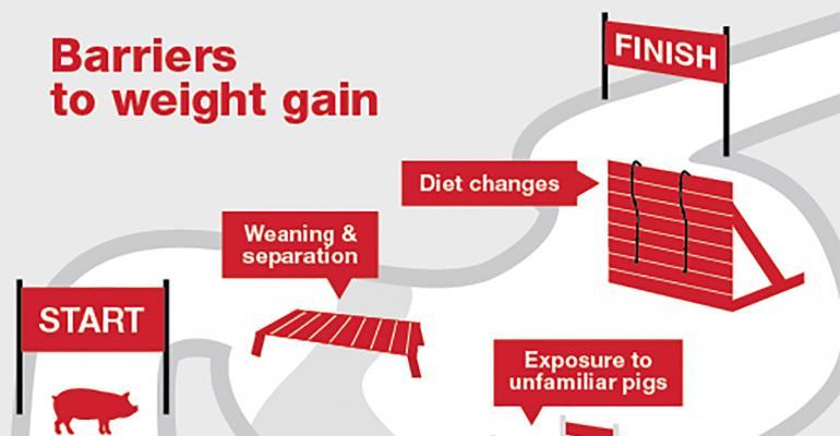 NHF-Purina-Barriers to weight gain-1540.jpg