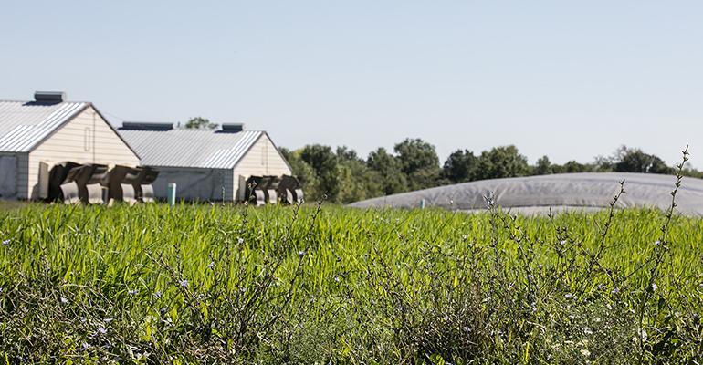 Since the 1990s, Smithfield has explored ways to transform hog manure into renewable energy.