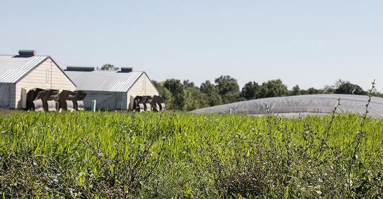 Since the 1990s, Smithfield has explored ways to transform hog manure into renewable energy.