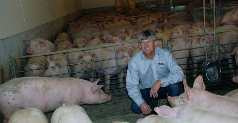 Terry O'Neel in pen with pigs