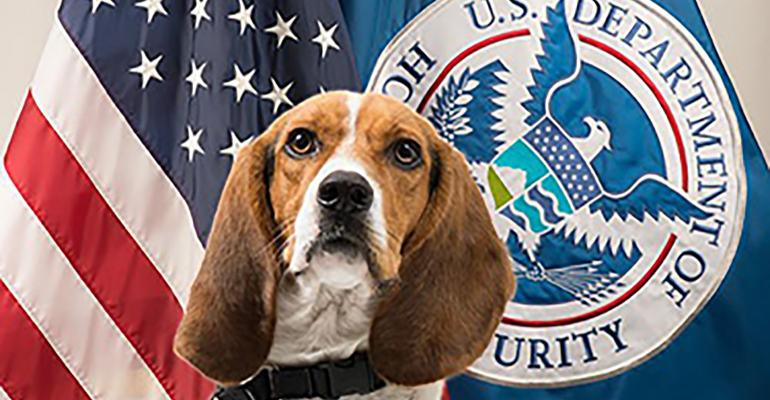 "Hardy, a USDA trained detector dog and member of the ""Beagle Brigade,"" sniffed out a roasted pig head in luggage at Atlanta's Hartsfield-Jackson International airport."