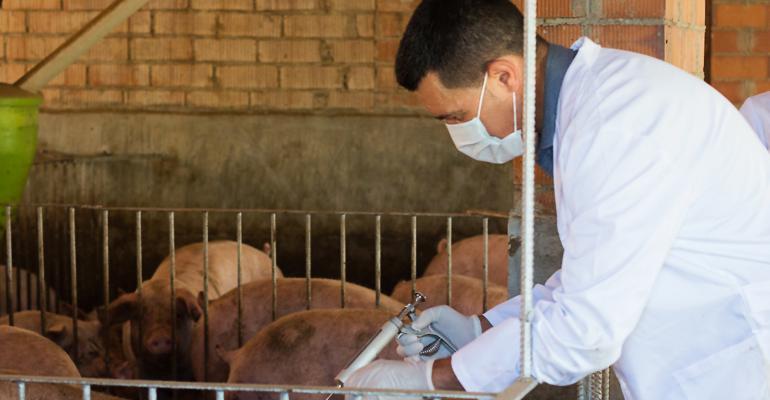 Veterinarian giving antibiotics