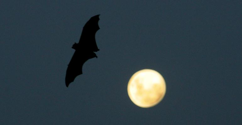 bat flying by a full moon